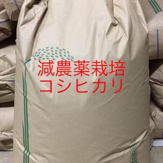 白米コシヒカリH30年京都産24.5キロ