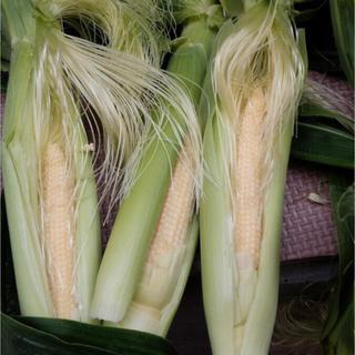 ベビーコーン(野菜)