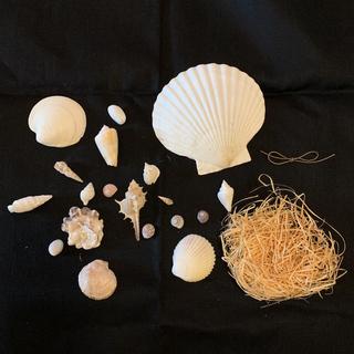 アフタヌーンティー(AfternoonTea)の貝殻(置物)