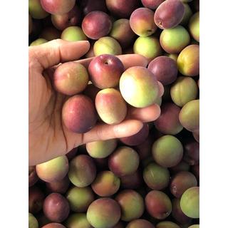 【超珍種】紫南高梅 2kg L〜2Lサイズ(フルーツ)