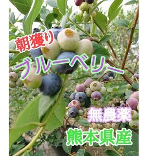 ブルーベリー250g(真空パック) 熊本県産
