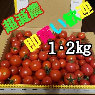 赤い宝石!【水の都熊本産】ミニトマト箱込み1,2㎏まずはひと口マヨネーズいかが?