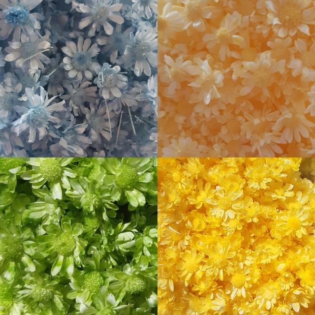 スターフラワーミニ8色 お試し35本 ハンドメイドのフラワー/ガーデン(ドライフラワー)の商品写真