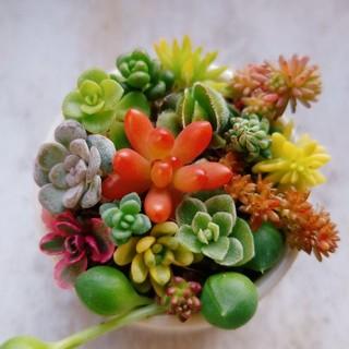 20種類♡多肉植物♡強い品種(その他)