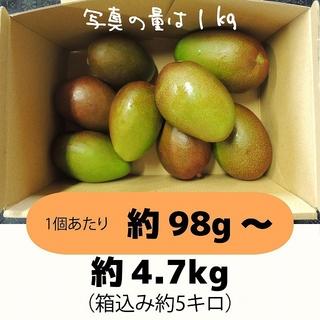 [橙5-7]約4.7キロ グリーンマンゴー 青マンゴー 摘果マンゴー 加工用(フルーツ)