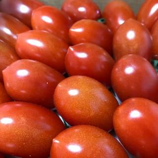トマト桃太郎5kg と ミニトマト2kg をセットで値下げ(野菜)