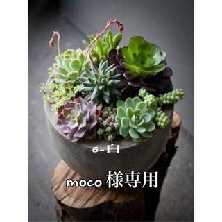 Moco様専用