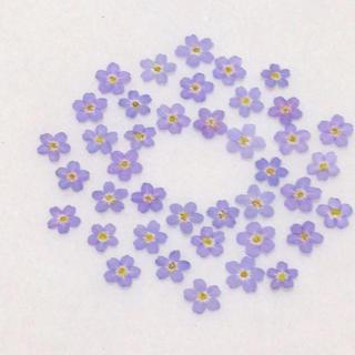 80  押し花セット♡即日発送✿ハンドメイド 素材 小花(ドライフラワー)