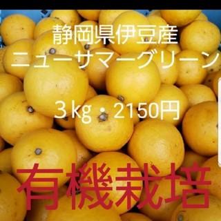 静岡県伊豆産 ニューサマーオレンジ(フルーツ)
