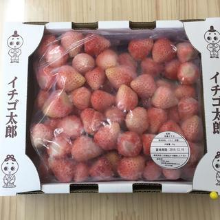奈良県産 白いちご(ピンク)淡雪 2kg  (フルーツ)