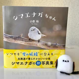 本  写真集  シマエナガ  野鳥  北海道  ハンドメイド