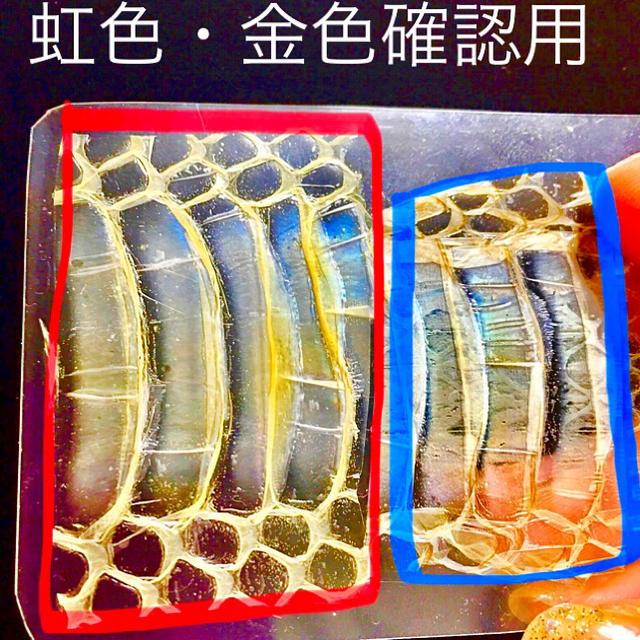 祝令和 55枚限定龍神お守り☆貴重な全身虹色と金色に輝く白蛇の脱け殻を使用 ハンドメイドの生活雑貨(その他)の商品写真