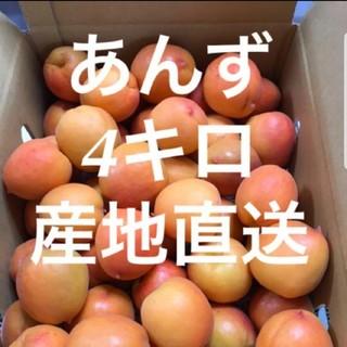 送料込み あんず 産地直送 4キロ 丸かじり ジャム シロップ漬け アンズ 杏子