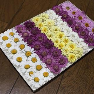 お花屋さんが作ったドライフラワーBox ② マーガレットなど61冠(ドライフラワー)