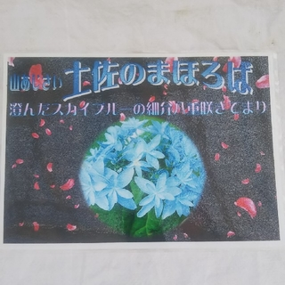 山あじさい  土佐のまほろば9cmポット来年開花用苗(その他)