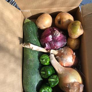 無農薬     野菜詰め合わせ   採れたて(野菜)