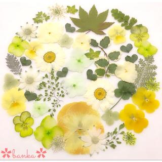 ✿押し花素材✿イエロー&グリーン系アソート【40枚】