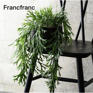 Francfranc - Francfranc フェイクグリーン  シダ✩.*˚