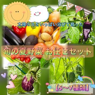旬の夏野菜 5〜7種類 お任せ詰め合わせ 野菜セット 60サイズ 送料無料!