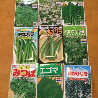 野菜の種 ハーブの種よりどり6種類 家庭菜園 ガーデニング向け(野菜)