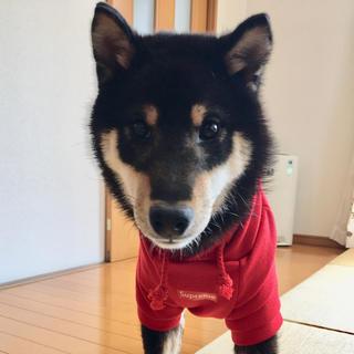 シュプリーム(Supreme)のSupreme ボックスロゴ 犬用 パーカー(犬)