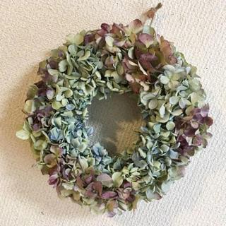 秋色紫陽花のドライリース・ライムグリーンレッド