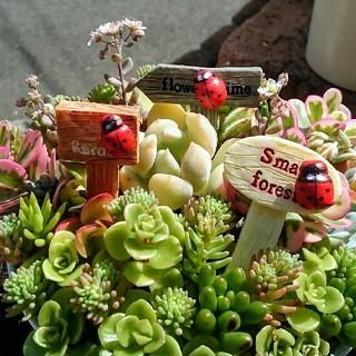 多肉植物★ガーデニングカード★三個セット♪(その他)