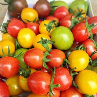 カラフルトマト 1キロ(野菜)