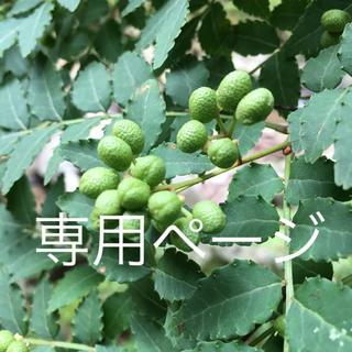 れぃとき様用 三重県 天然山椒の実300g(No906-02)(野菜)