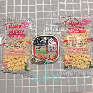 CASAR - 犬用 ボーロ &  シーザー吟選ビーフ  ( おまけ )