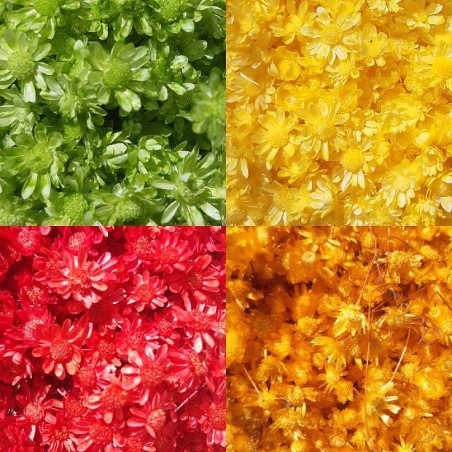 スターフラワーミニ他9色 お試し35本 ハンドメイドのフラワー/ガーデン(ドライフラワー)の商品写真