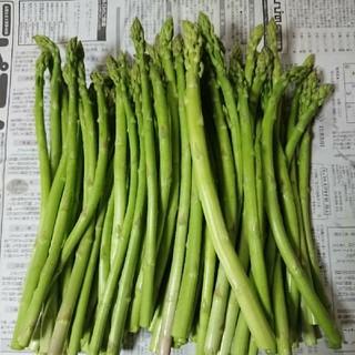 週末限定!佐賀県産グリーンアスパラ1.6キロ(訳あり)(野菜)