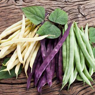 菜豆 3色MIX(緑紫黄)8粒(野菜)