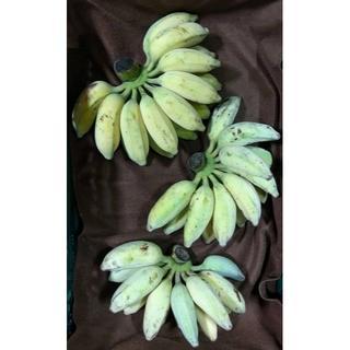 ミント様専用、銀バナナ4.25㎏と海ぶどう500gのセット(フルーツ)