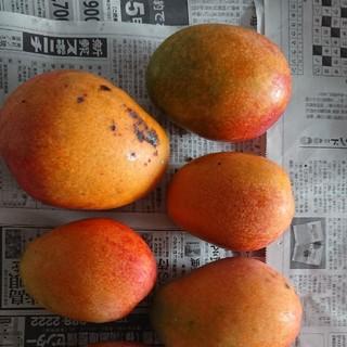 8 マンゴー 3kg 家庭用 黒点あり(フルーツ)