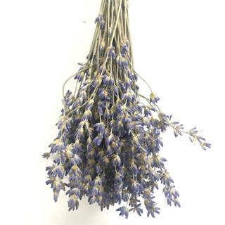 北海道富良野ラベンダーおかむらさき100本ドライフラワー 花材(ドライフラワー)
