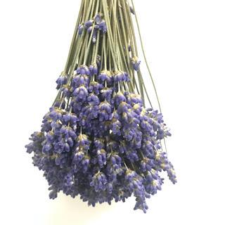 北海道富良野ラベンダー濃紫100本ドライフラワー 花材(ドライフラワー)