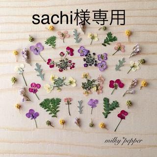 sachi様専用 ドライフラワー 押し花 小花ミックス アリッサム(ドライフラワー)
