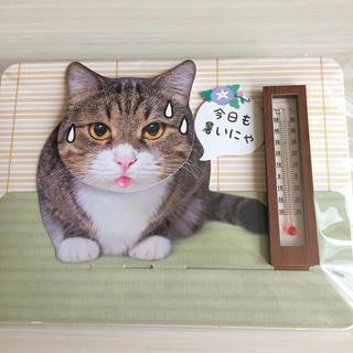 サンリオ(サンリオ)のサンリオ夏カード 猫 (コズエ様 専用)(カード/レター/ラッピング)