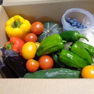 無農薬夏野菜とブルーベリー家庭菜園からのお届け物(野菜)