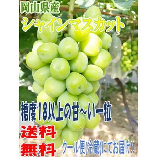 《送料無料クール便》岡山県産 シャインマスカット 7月末頃収穫予定 採れたて1房(フルーツ)