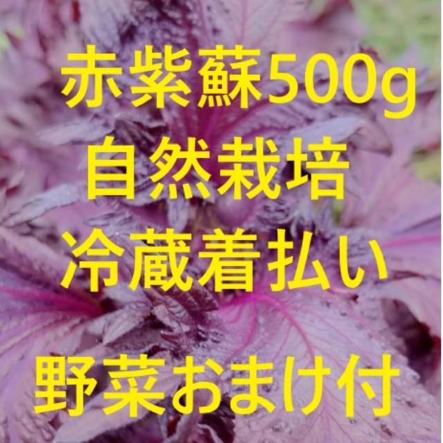 赤紫蘇500g 野菜のオマケ付き 自然栽培 食品/飲料/酒の食品(野菜)の商品写真
