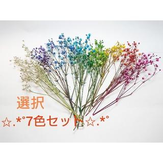 ★ドライフラワー かすみ草 7色オーダー★(ドライフラワー)