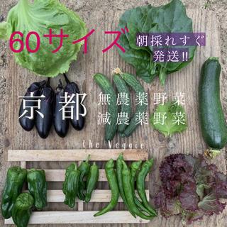 京都 無農薬 減農薬新鮮野菜詰め合わせ!!朝採り野菜(野菜)