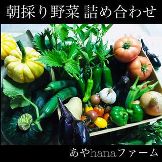 ② 朝どり! 野菜詰め合わせ ☆農家直送☆収穫当日に発送します☆ 野菜(野菜)