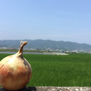 淡路島完熟玉ねぎ10キロ(野菜)