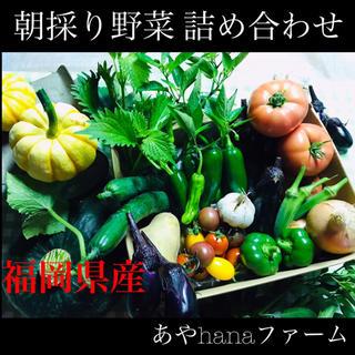 ④ 朝どり! 野菜詰め合わせ ☆農家直送☆収穫当日に発送します☆ 野菜(野菜)