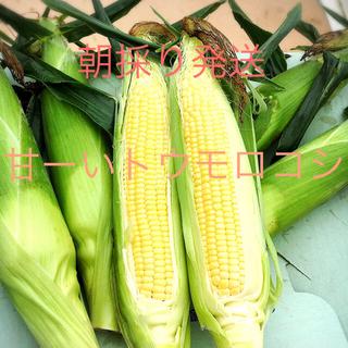 あまーい朝どりトウモロコシ  特別価格  16.17日収穫発送分(野菜)