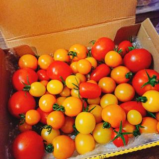 お買い得!中玉フルーツトマトフルティカ&ミニトマト詰め合わせ(野菜)