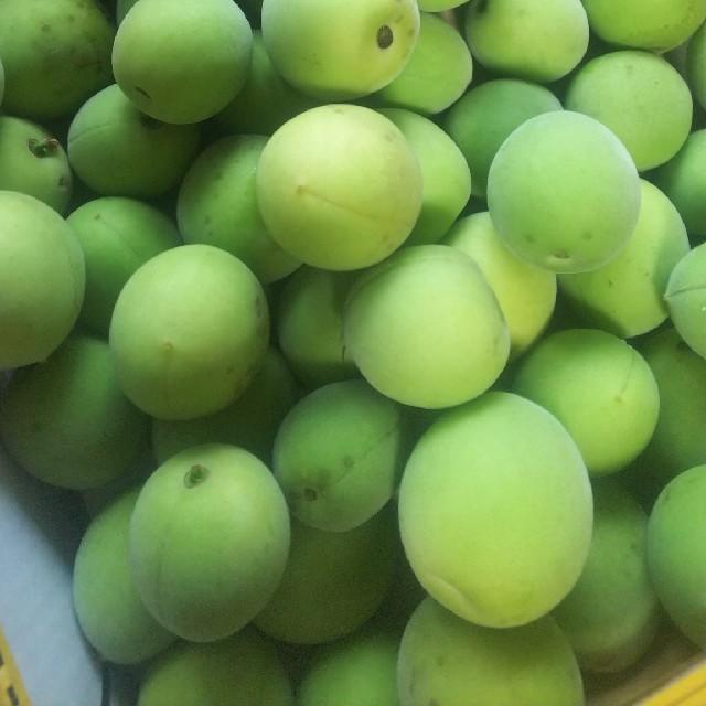 青梅 無農薬 5キロ 食品/飲料/酒の食品(フルーツ)の商品写真